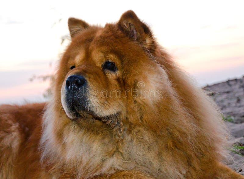 De hond van het voer royalty-vrije stock foto