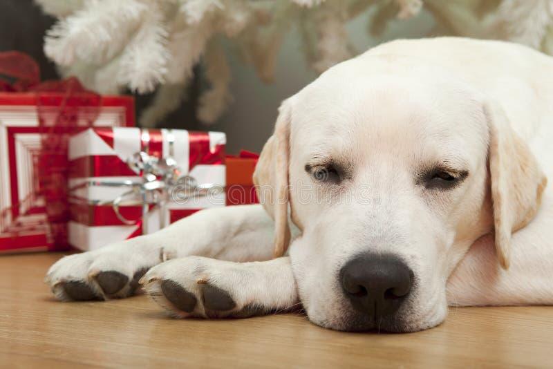 De Hond van Kerstmis royalty-vrije stock foto