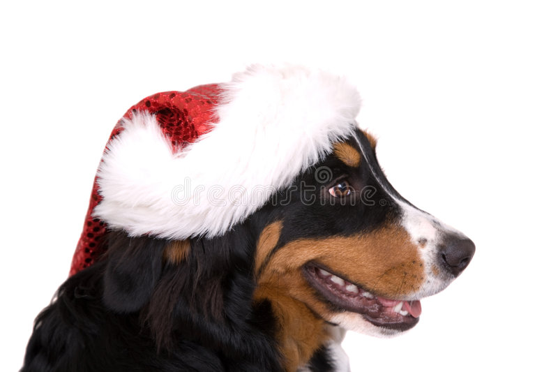 De hond van Kerstmis stock foto's