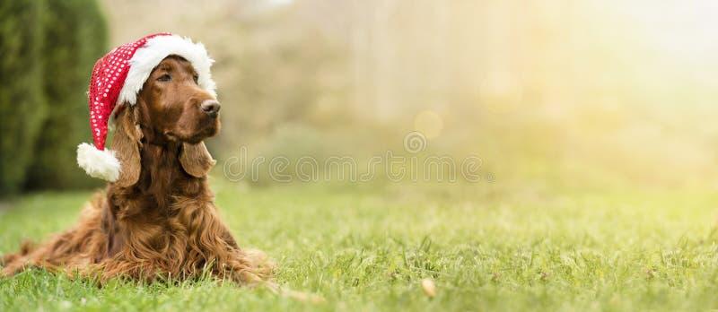 De hond van Kerstmissanta claus royalty-vrije stock fotografie