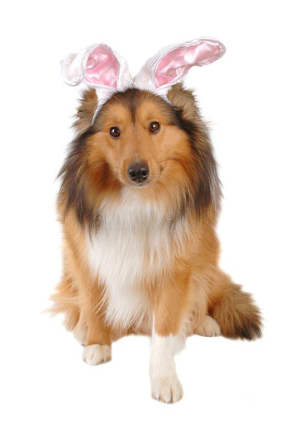 De hond van Pasen stock foto