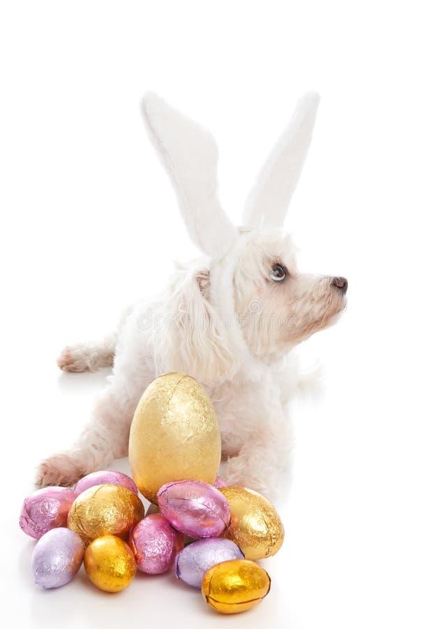 De hond van Pasen met konijntjesoren en eieren stock afbeeldingen