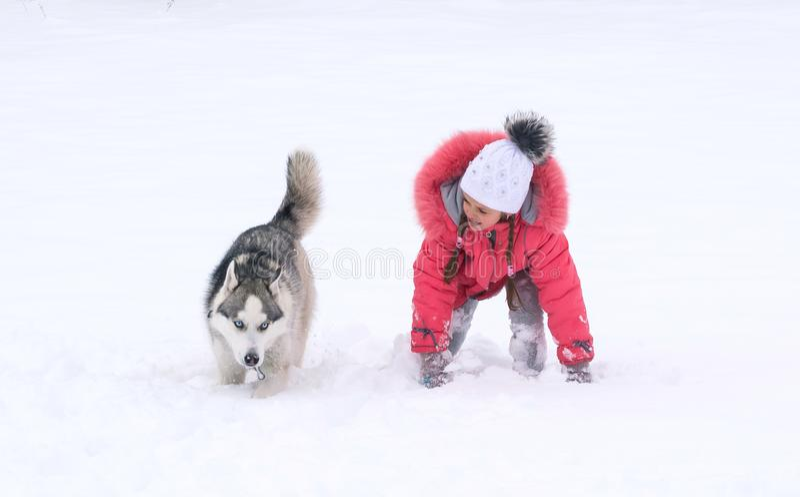 De hond van Siberische schor en het meisje rennen stock foto