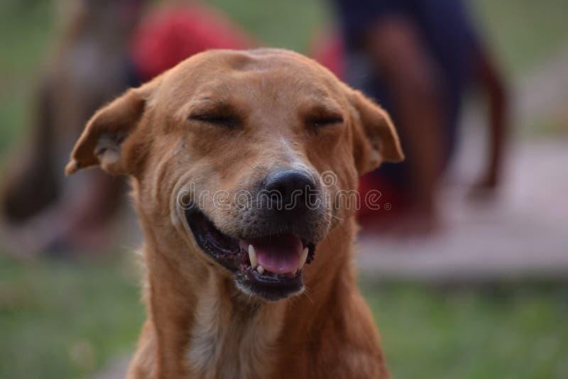De hond voelt doen schrikken stock foto's