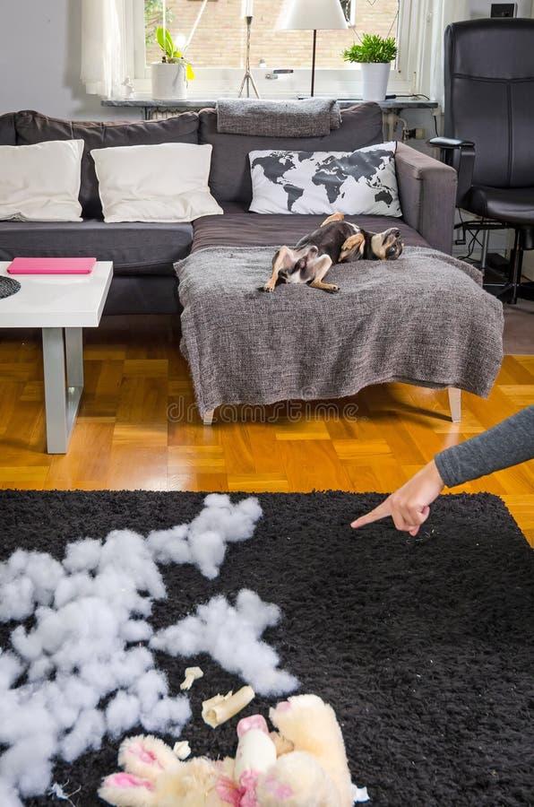 De hond voelt droevig stock foto