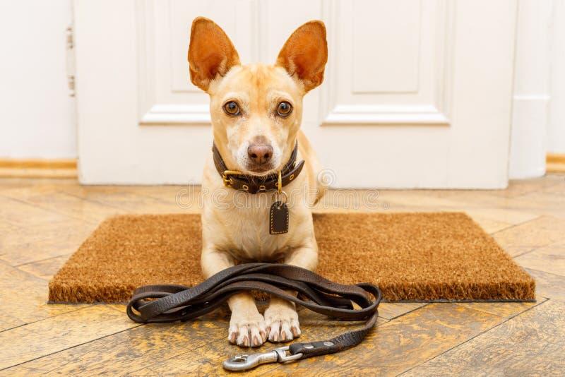 De hond wacht bij deur op een gang royalty-vrije stock afbeeldingen
