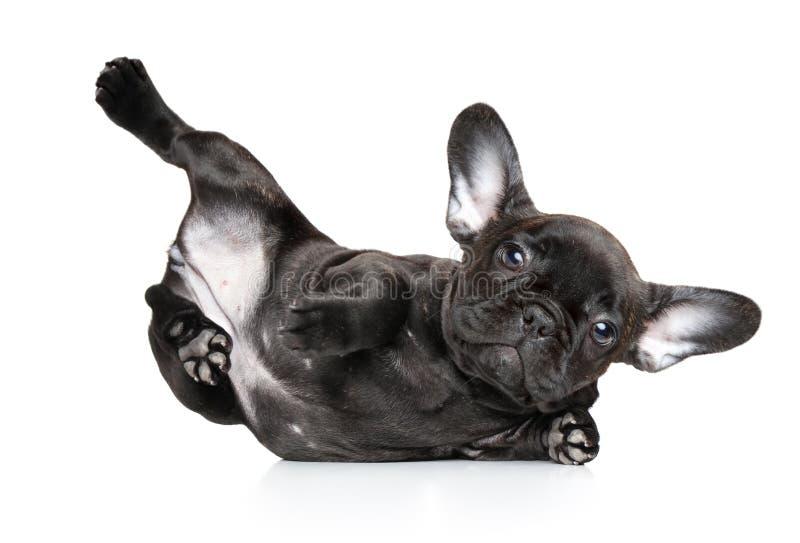 De hond in yoga stelt op een witte achtergrond stock fotografie
