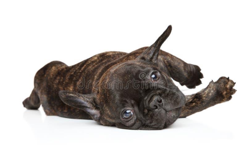 De hond in yoga stelt op een witte achtergrond royalty-vrije stock fotografie