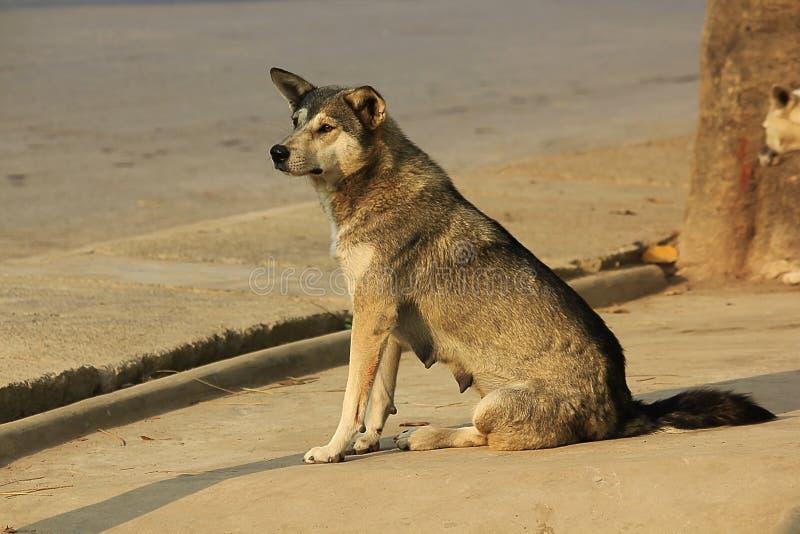 De hond zit het bekijken iets royalty-vrije stock afbeeldingen