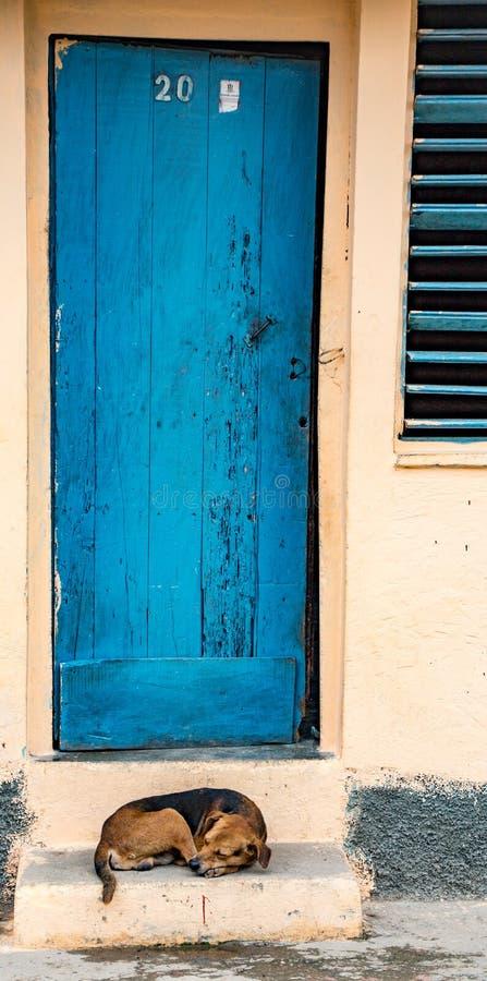 De hond zit op portiek boven blauwe deur en shuttered venster Teken  stock afbeelding