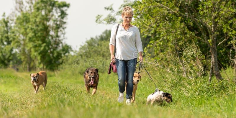 De hondbabysitter loopt met vele honden op een leiband Hondleurder met verschillende hondrassen in de mooie aard stock foto