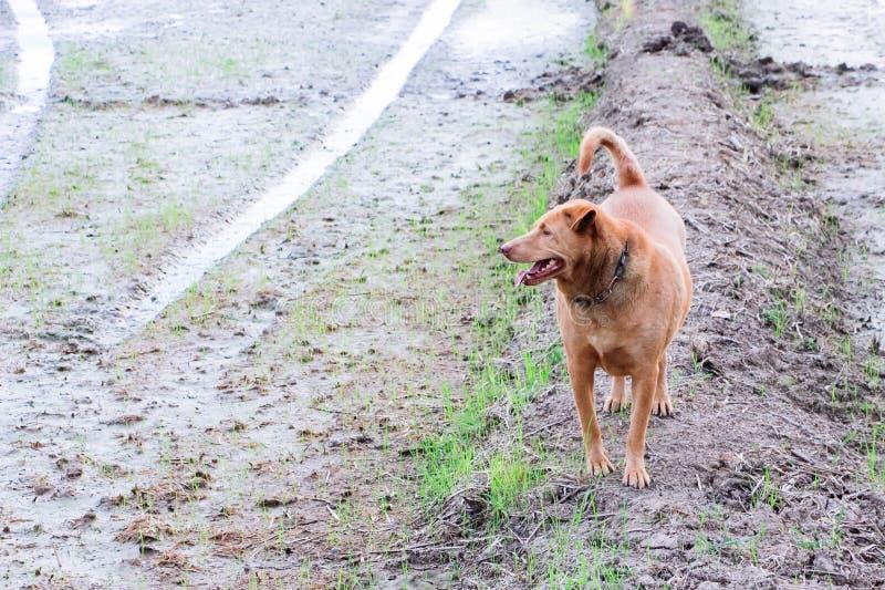 De honden bevinden zich in de verse lucht stock foto's