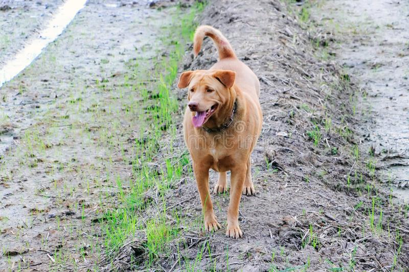 De honden bevinden zich in de verse lucht royalty-vrije stock foto