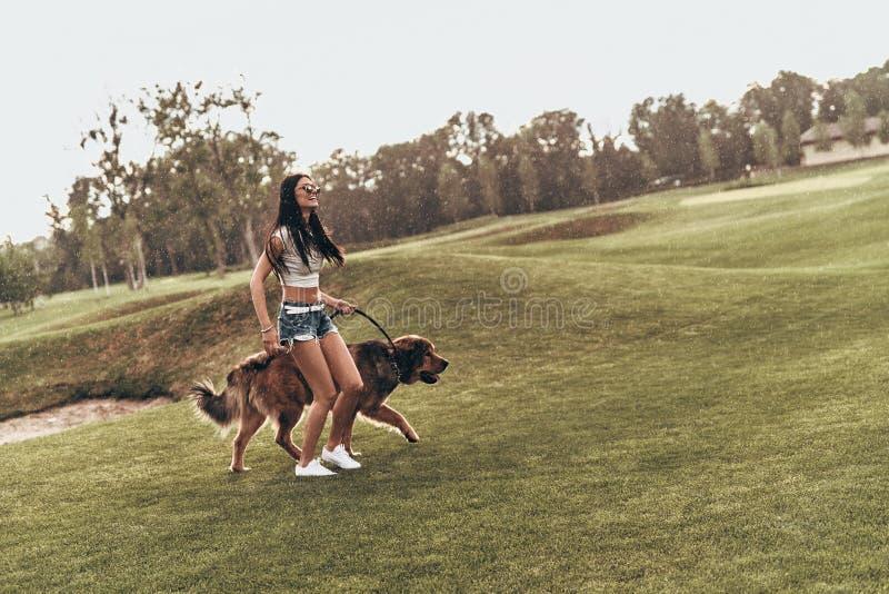 De honden maken het leven beter stock fotografie