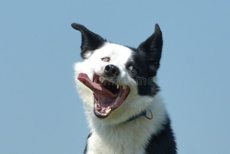 De honden tonen royalty-vrije stock fotografie