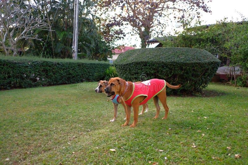 De honden in de tuin royalty-vrije stock afbeeldingen