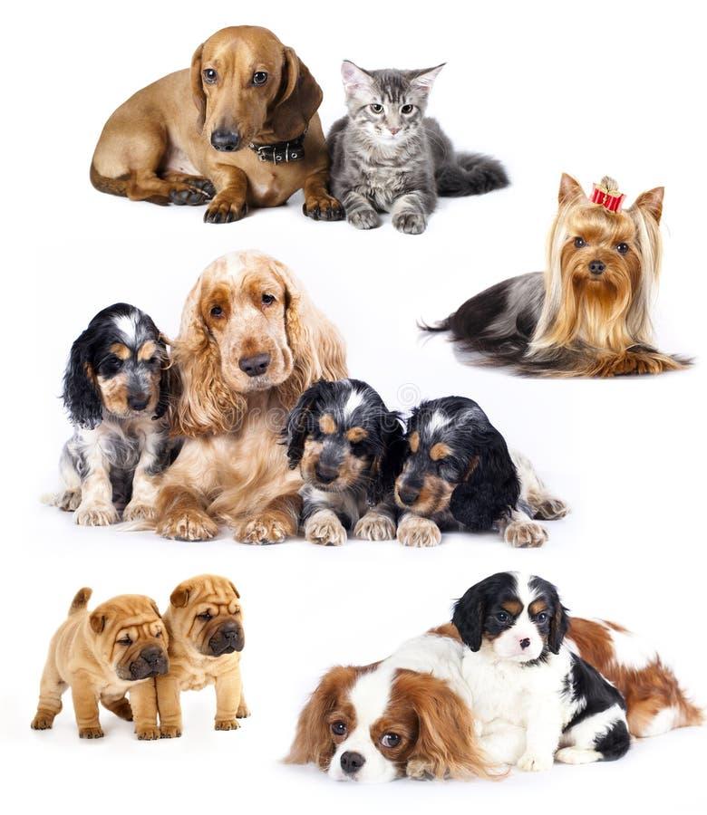 De honden van de groep stock afbeelding