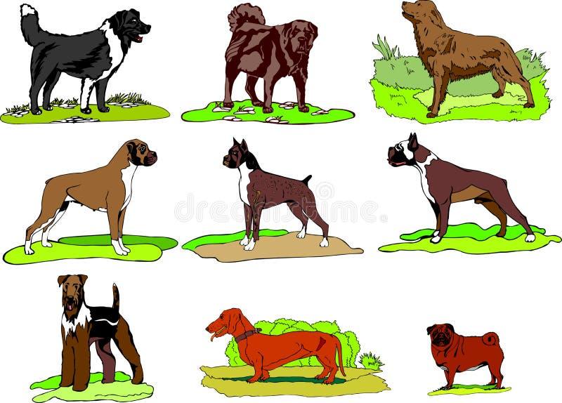 De honden van Verschillende rassen blijven op gras, embleem, druk, onmiddellijke download, Hondillustratie geplaatste svg formate royalty-vrije illustratie