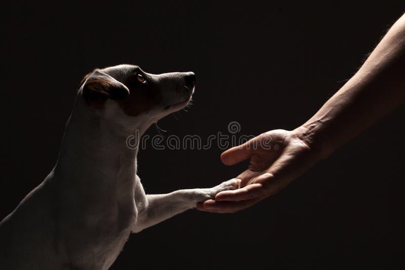De hondpoot neemt de man stock fotografie