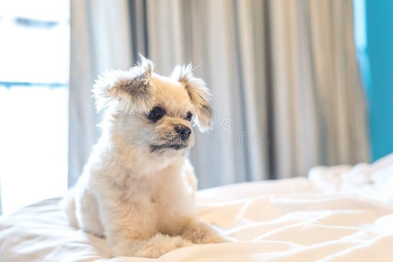 De hondslaap ligt thuis op bed in slaapkamer of hotel stock afbeelding