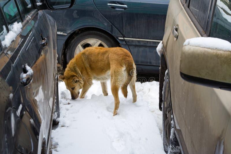 De hondval van auto's stock fotografie