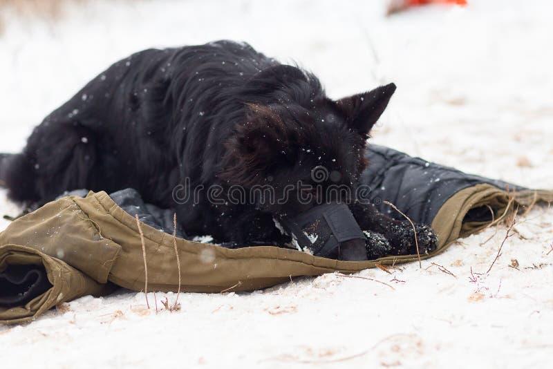 De hondwinter in een beschermend masker, snuit royalty-vrije stock afbeelding