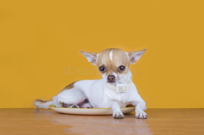 De hongerige kat wil een kleine hond eten royalty-vrije stock afbeeldingen