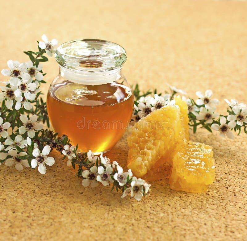 De honing van Manuka stock afbeeldingen