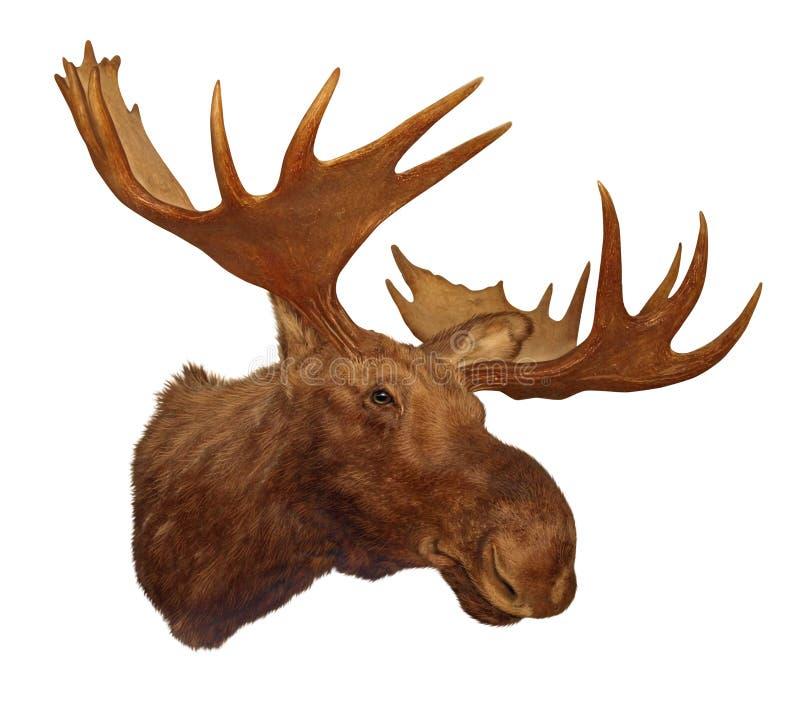 De hoofdgeweitak van Amerikaanse elanden royalty-vrije illustratie