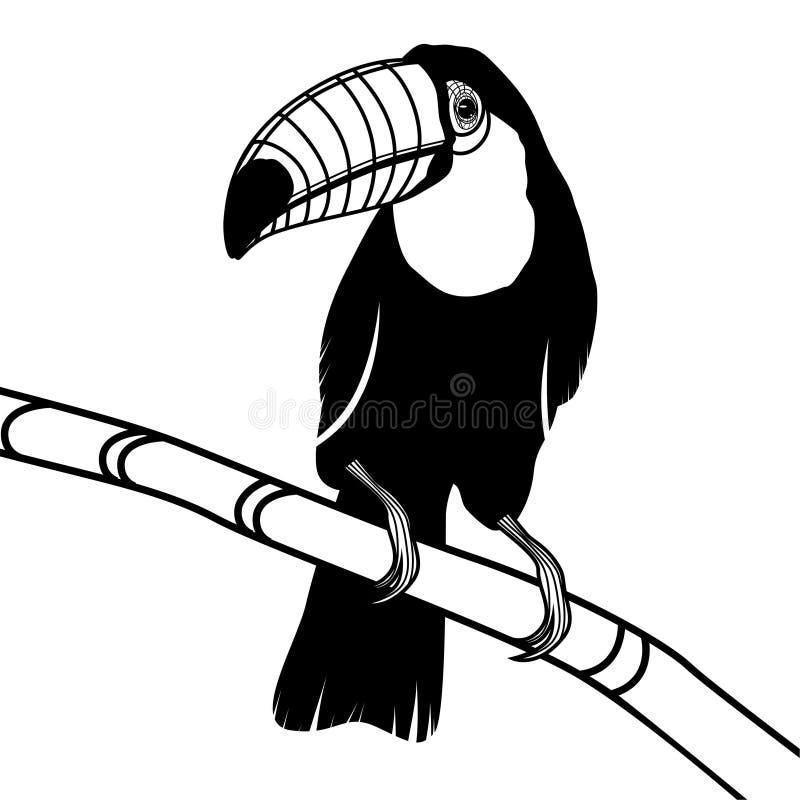 De hoofdillustratie van de toekanvogel voor t-shirt stock illustratie