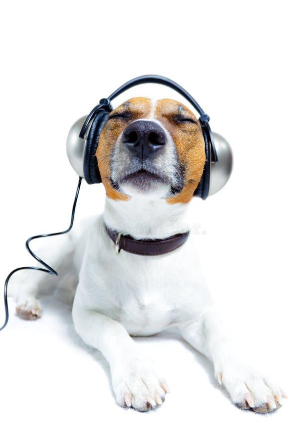 De hoofdtelefoons van de hond royalty-vrije stock foto