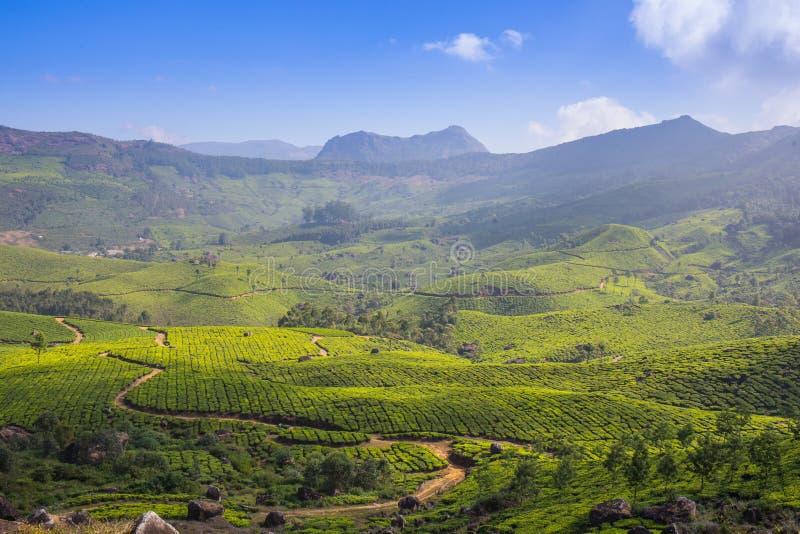 De hooglanden van de aanplantingsCameron van de thee royalty-vrije stock foto