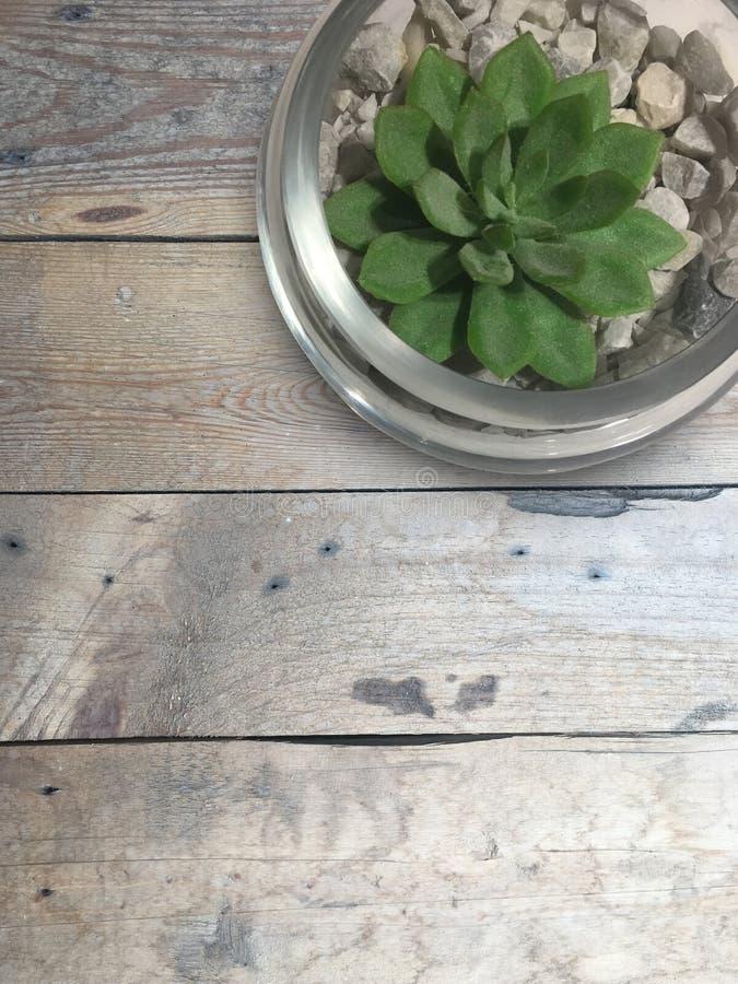 De hoogste groene installatie van de meningsclose-up op glaskop op houten vloer backgr royalty-vrije stock afbeelding