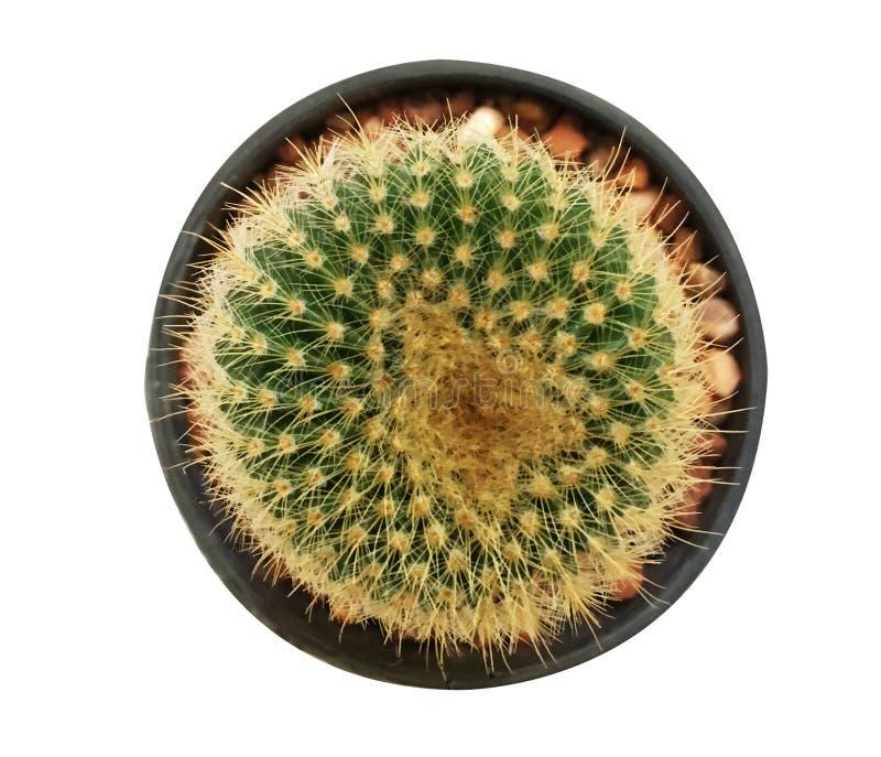 De hoogste mening van de cactus royalty-vrije stock afbeeldingen