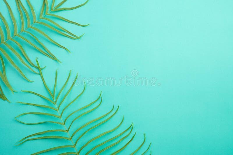 De hoogste mening van de Tropische zomer op heldere pastelkleur groene achtergrond, varenbladeren plaatste in het kader rond lege royalty-vrije stock foto