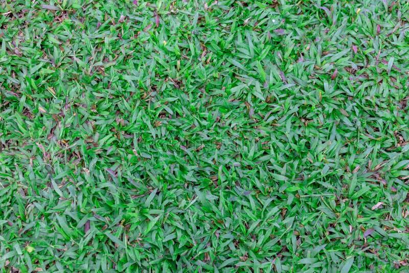De hoogste textuur van het menings medio-Hoge groene gazon Aard groen gras in de tuin, Aardachtergrond royalty-vrije stock afbeelding