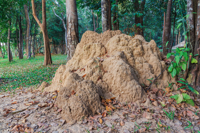 De hoop van de termiet in het park van Si Sa Ket, Thailand stock fotografie