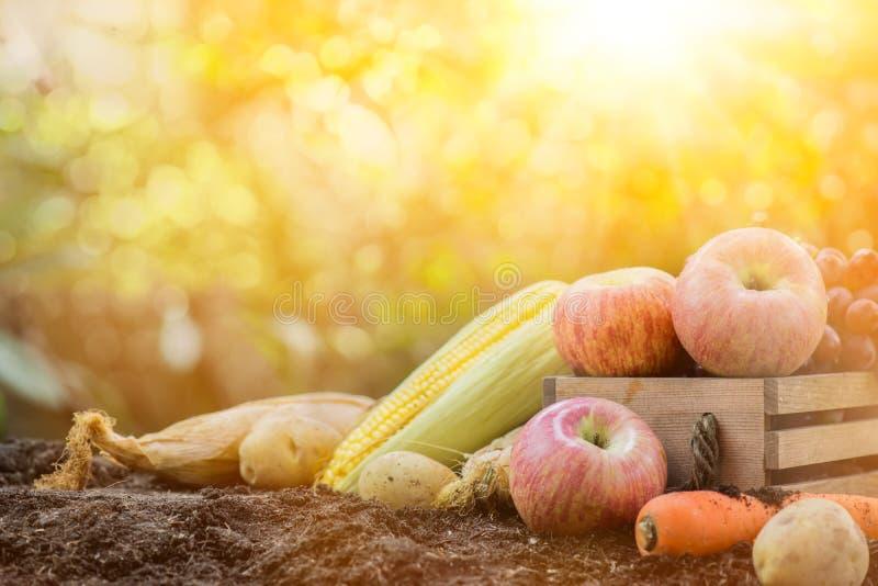 De hoorn des overvloeds van de dalingsoogst De herfstseizoen met fruit stock foto's