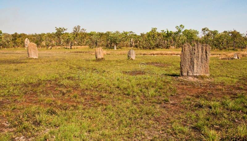 De hopen van de termiet stock fotografie