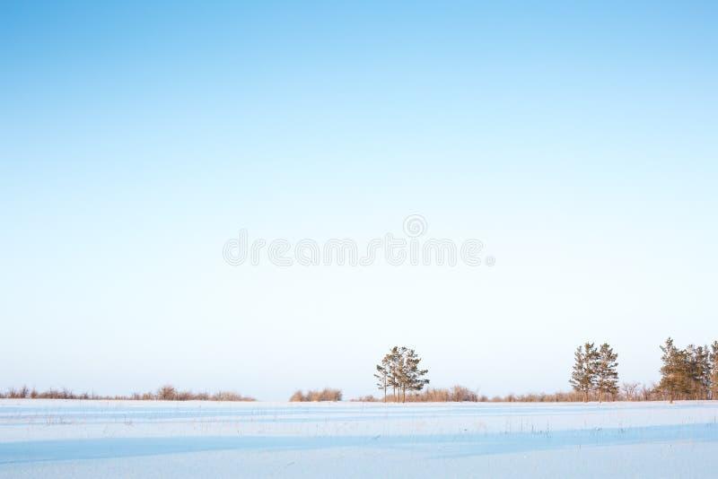 De horizon, de bomen en de sneeuw in het bos stock afbeelding