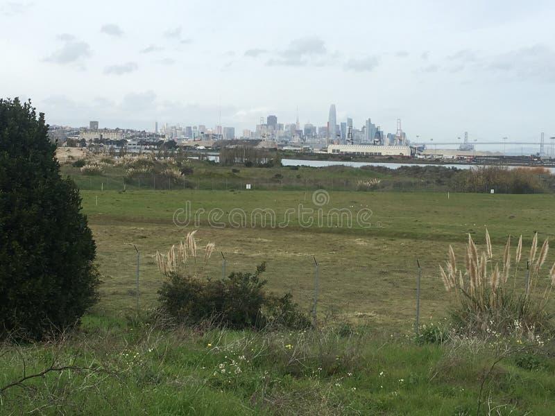 De horizon die van San Francisco voor altijd, als de wilde vossestaart groeien stock foto