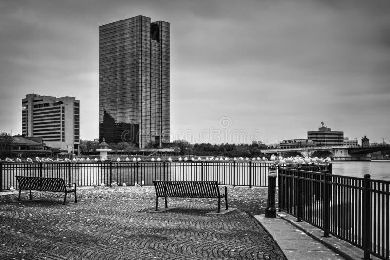 De Horizon van de stad stock fotografie