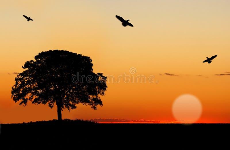 De Horizon van de zonsondergang royalty-vrije stock afbeeldingen