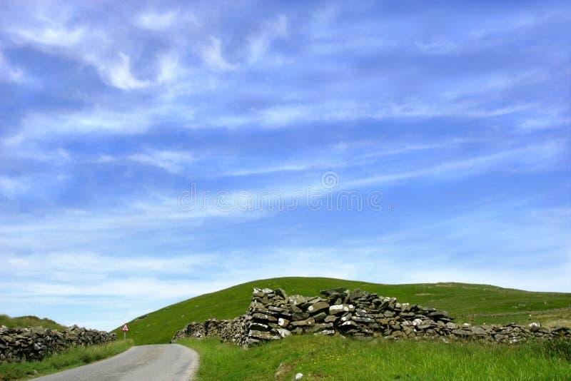 De Horizon van het riet en van het Gras stock afbeelding