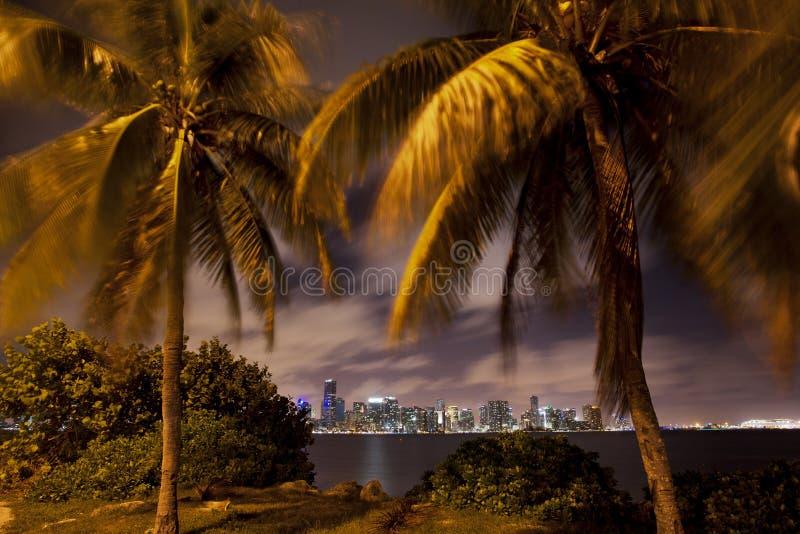 De horizon van Miami door de palmen stock foto