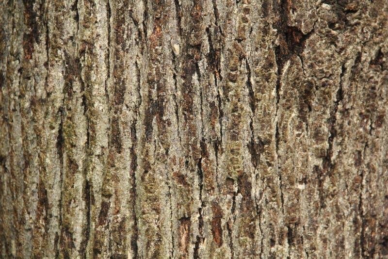 De horizontale bruine groene textuur van de boomboomstam royalty-vrije stock foto