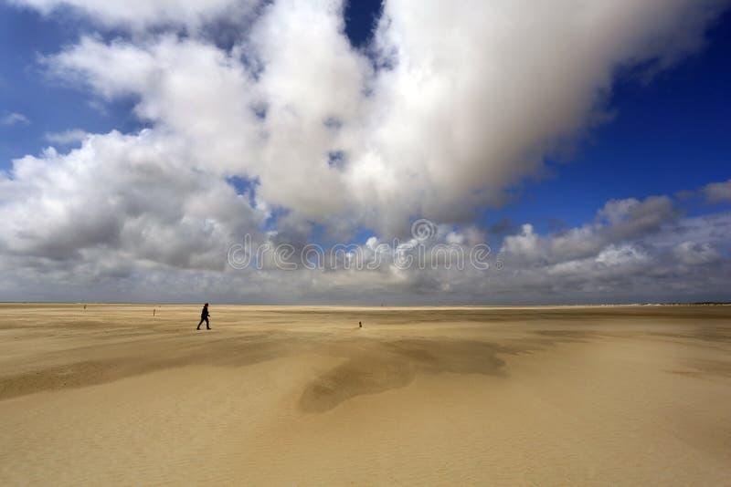 De Hors på Texel, Nederländerna arkivbilder