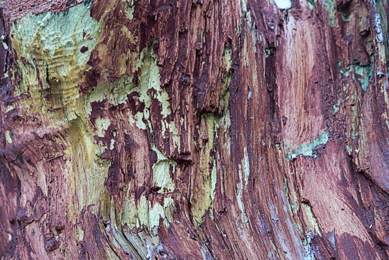 De houten achtergrond doorstond gebroken die boomboomstam met de bescherming van het verfinsect en het ontwerp van de breukbasis  royalty-vrije stock foto's