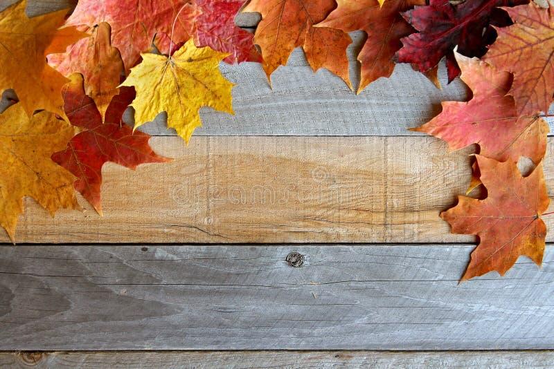 De Houten Achtergrond van Autumn Maple Leaves Framing Rustic stock afbeeldingen