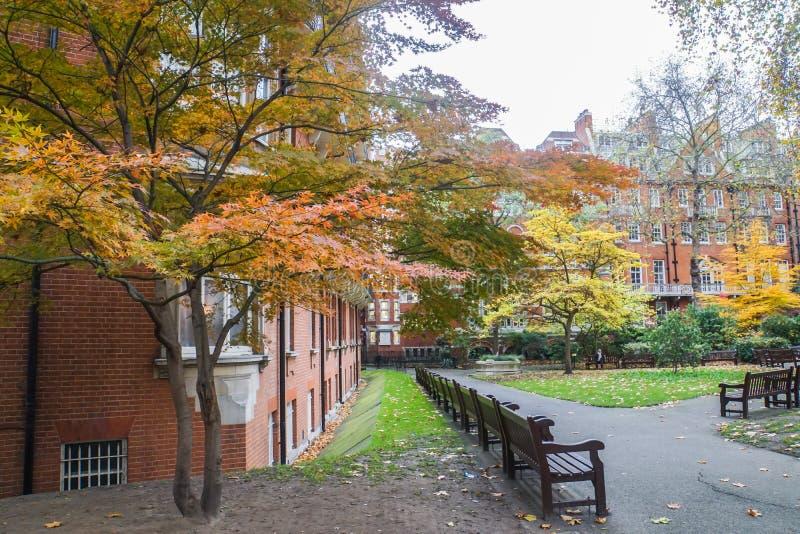 De houten bank voor rust en de bomen in de openbare tuin van Londen worden oranje en geel in autum royalty-vrije stock fotografie